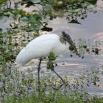 Bird on the river bank at the marina.