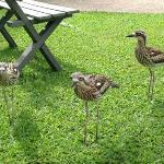 Curlews are permanant residents of Canopy Chalets