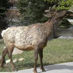 Elk! * We named him Scooter! *