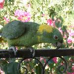 """""""Hola!"""" - Paco, one of the hotel's parrots"""