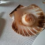 Photo of Coquille
