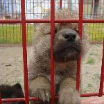 Northwood Buffalo andn Exotic Animal Ranch