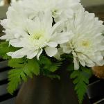 unknow flower