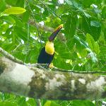 Resident toucan (he has a partner not in the photo)