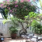 Foto de Boddhi Tree Umma