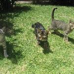 family of kittens - hope you like cats?