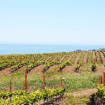 Derby Wine Estates, Derbyshire Vineyard, San Simeon, CA