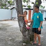 Baby climbing mango tree in parking lot