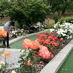 Photo de Queenstown Mini Golf Ltd