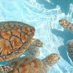 sea turtles at the sanctuary in the village