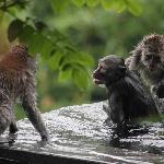 Monkeys enjoying the private pool more than me!