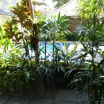 View from room terrace to pool...leafy & private!