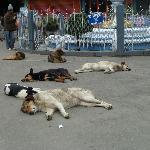 The ubiquitous sleeping dogs