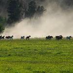 horses running across a field