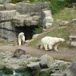 Zoo di Hannover