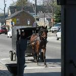Old Order Mennonite horse and buggy