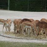 Regroupement d'antilopes