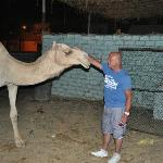 Nick and the camel
