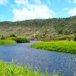 The Halawa river as it nears the sea.  This is on the other side of the stream from the paved ro