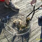 Hunting Island Crabbing....FUN!