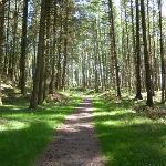 Wildlife rich woodland