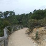 El camino del paraje natural