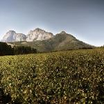 Backsberg vineyards with the Simonsberg Mountain in the background