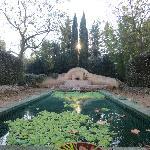 Garden - koi pond