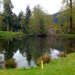 Pond - Pine Cone course