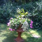 One of the many pots in the garden