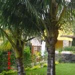 palmeras muchas palmeras