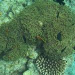 Nemo - house reef