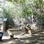 kangaroos in captivity, Featherdale Wildlife Park