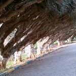 Rabat Gardens