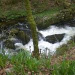River close by Rockford Inn