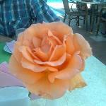 dagelijks verse bloemen