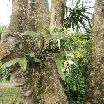 vacker orkide