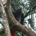 A persistent parrot in the Bloedel Conservatory