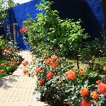 Le jardin coloré parfumé par ses roses et autres fleurs