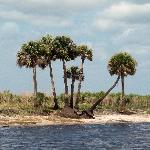 Airboat tour scenery