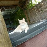 sweet kittie on hot tub which was so good!