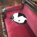 Simon the Cat.