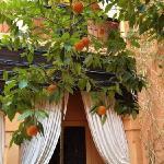 oranger au plein centre du Riad