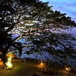 The gorgeous acacia tree as the resort's centerpiece