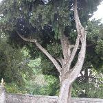 Vicino alla tomba del Petrarca