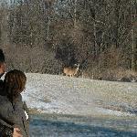 Deer roam freely around the property