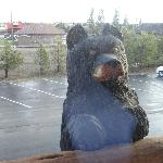 Bear looking in our room