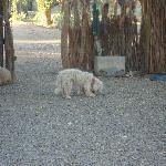 quintal, outro cão