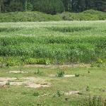 the marsh in spring