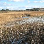 the marsh under ice